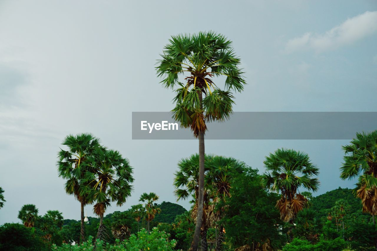 plant, sky, tree, growth, beauty in nature, nature, day, green color, no people, tranquility, tranquil scene, outdoors, scenics - nature, low angle view, flower, cloud - sky, freshness, flowering plant, tropical climate, land, coconut palm tree