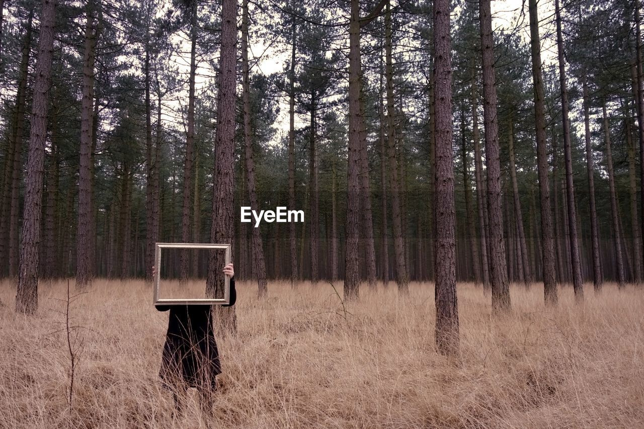 Person With Frame In Forest