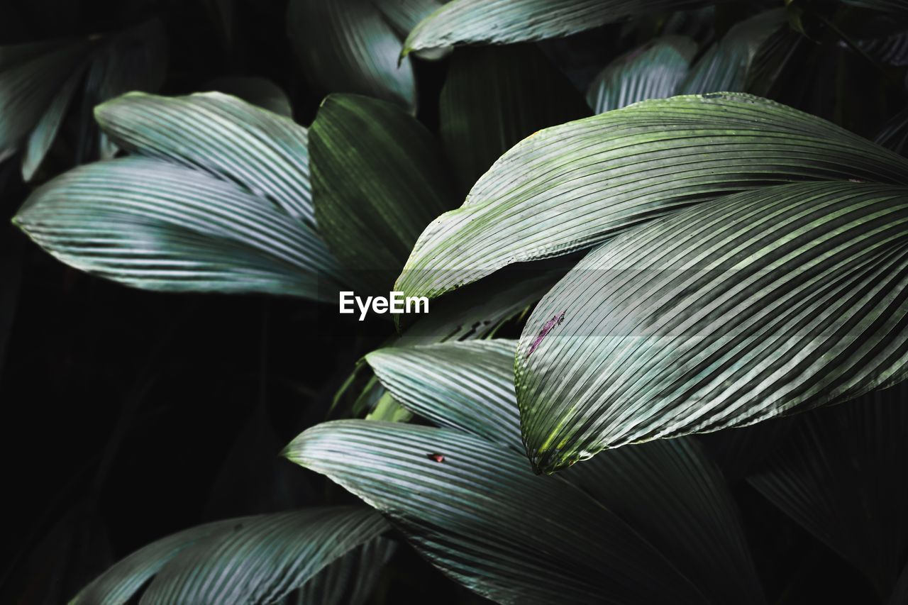 leaf, close-up, plant, plant part, beauty in nature, growth, green color, vulnerability, no people, fragility, nature, freshness, flower, flowering plant, focus on foreground, selective focus, pattern, white color, petal, day, palm leaf, flower head, leaves