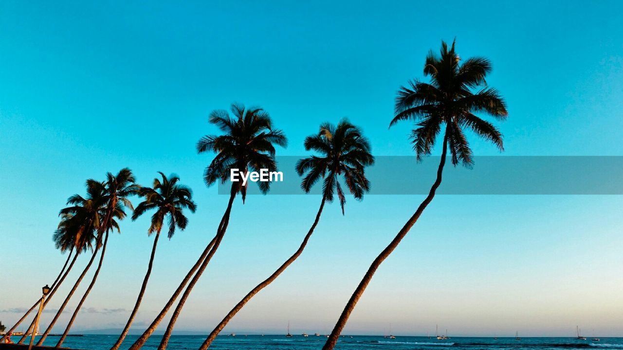 palm tree, sea, water, scenics, tranquil scene, tranquility, beauty in nature, nature, beach, horizon over water, tree, outdoors, blue, clear sky, no people, day, sky