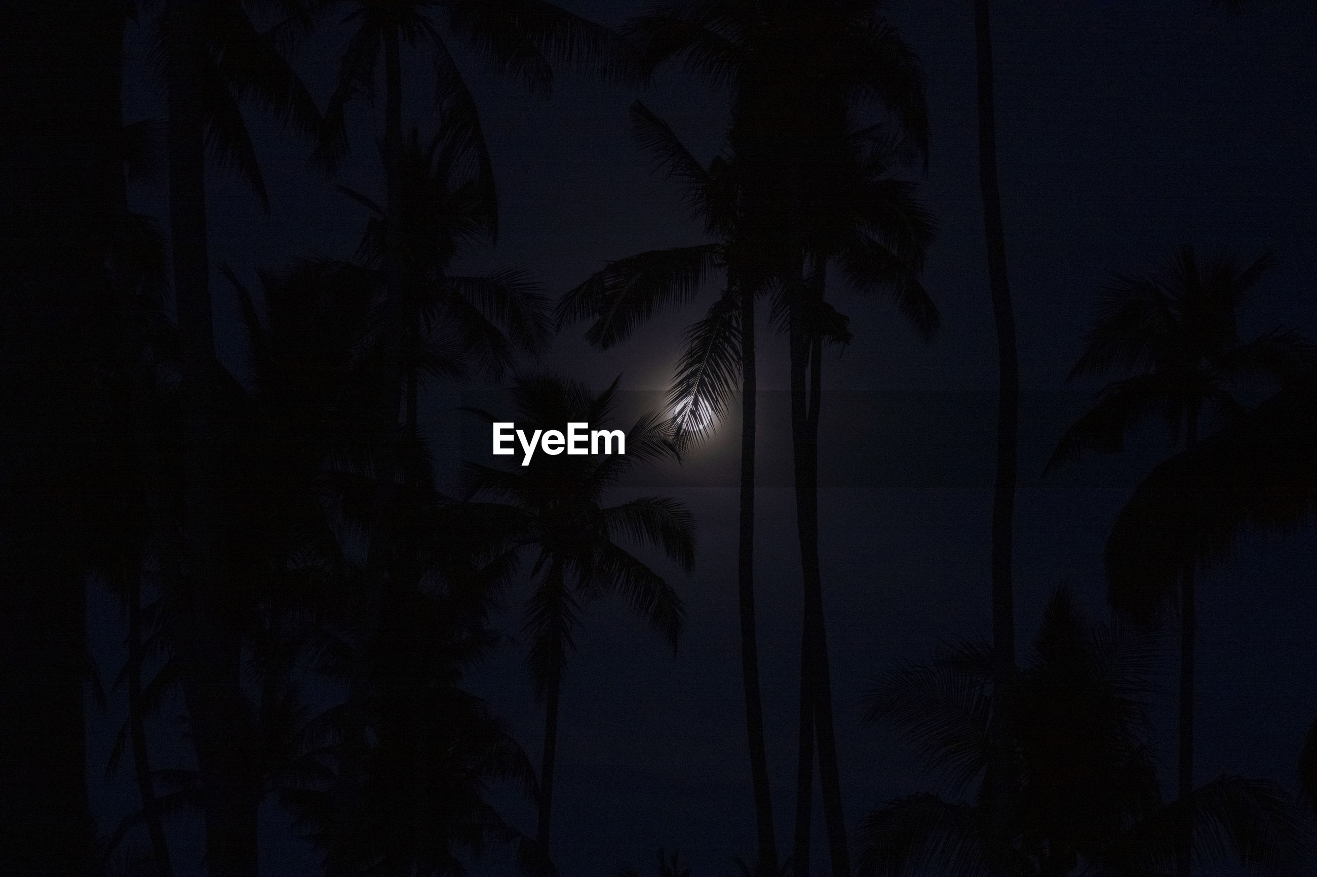 SILHOUETTE PALM TREES AT NIGHT