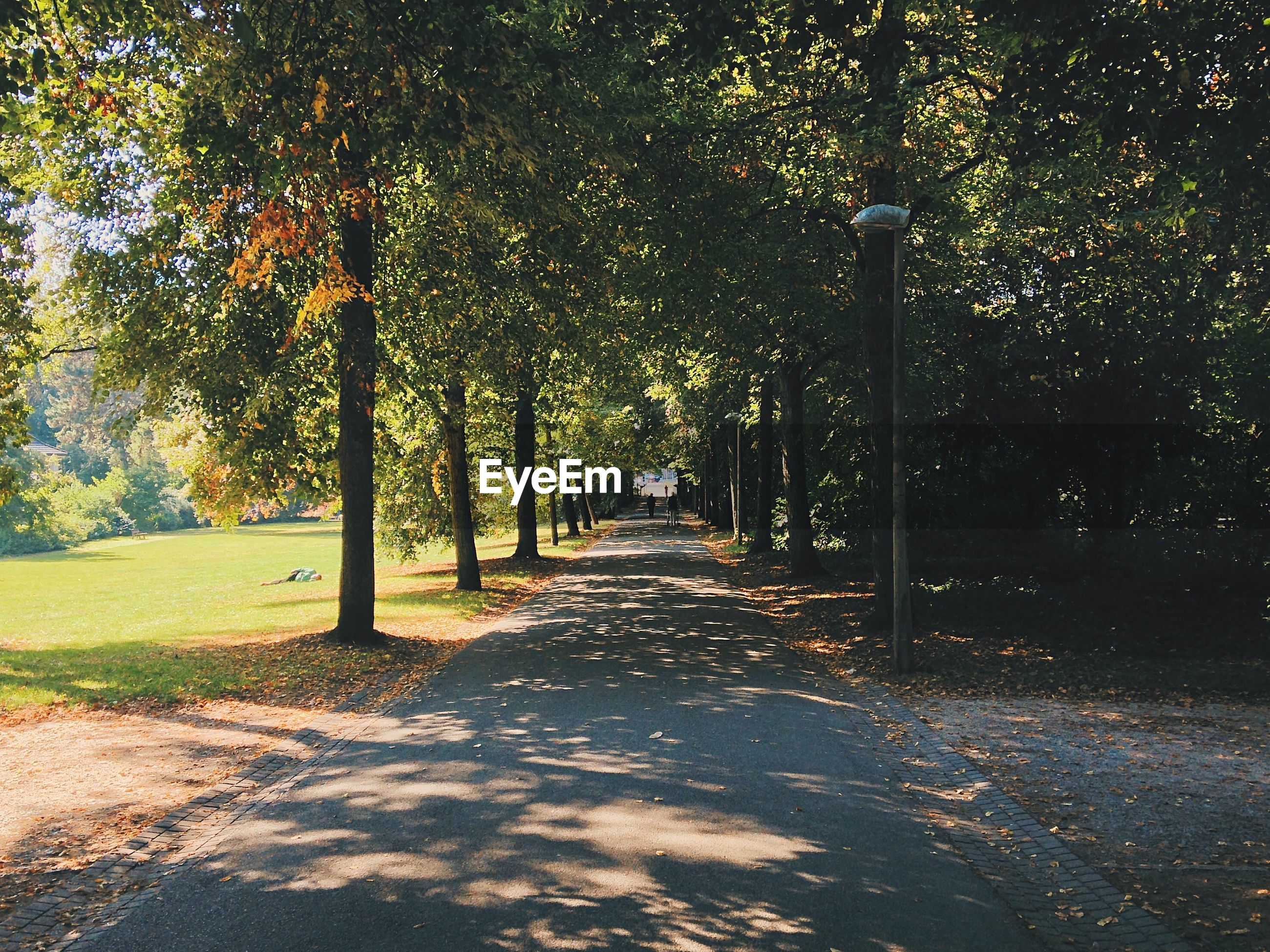 Street amidst trees at park
