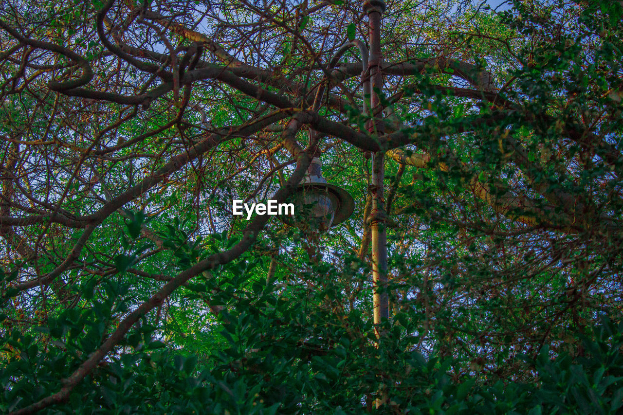 tree, low angle view, growth, no people, green color, branch, day, nature, outdoors, beauty in nature, architecture, time, close-up