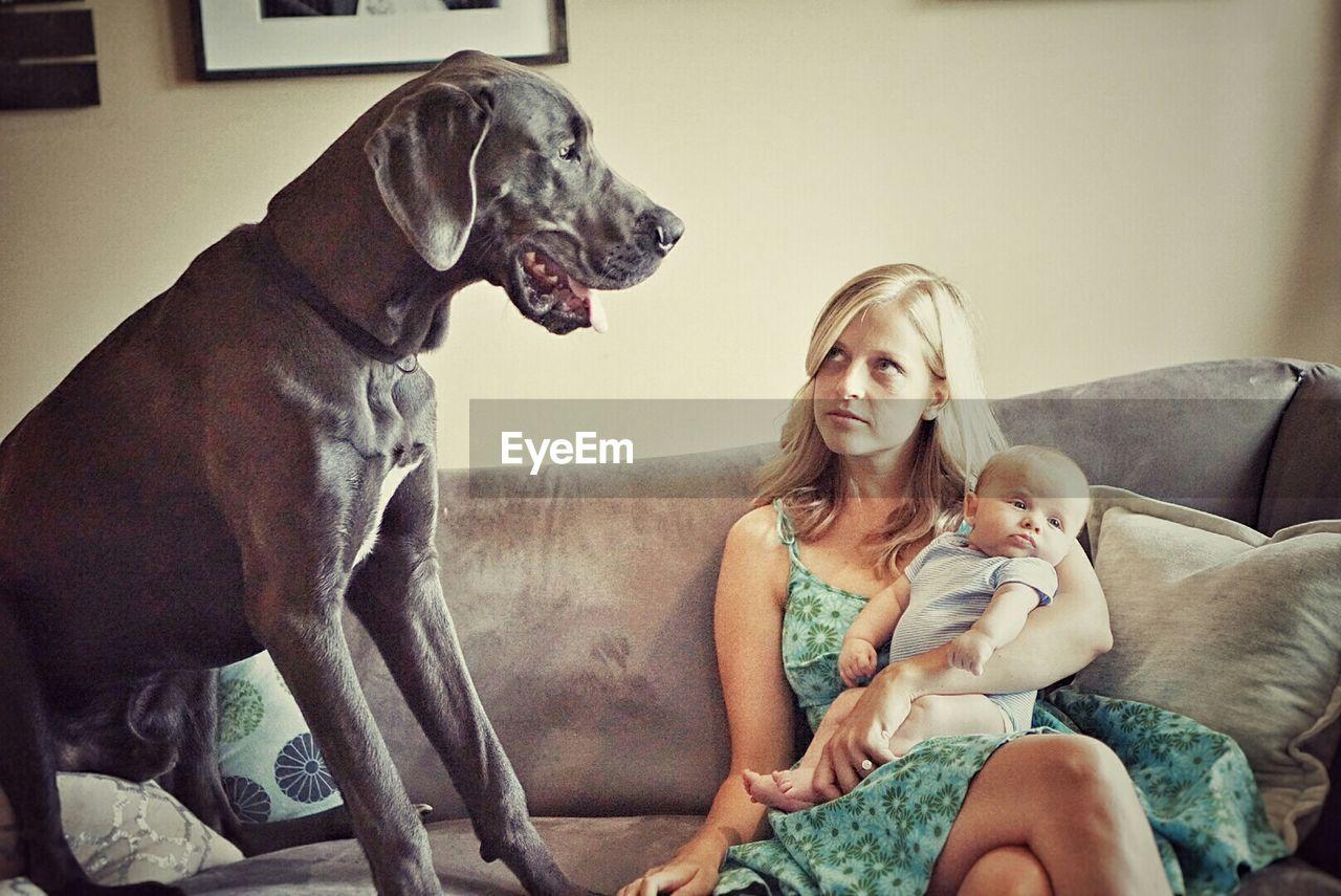 PORTRAIT OF DOG SITTING ON GROUND