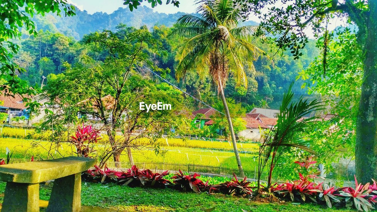 growth, tree, nature, beauty in nature, no people, outdoors, day, plant, flower, scenics, grass, landscape, mountain, sky, freshness
