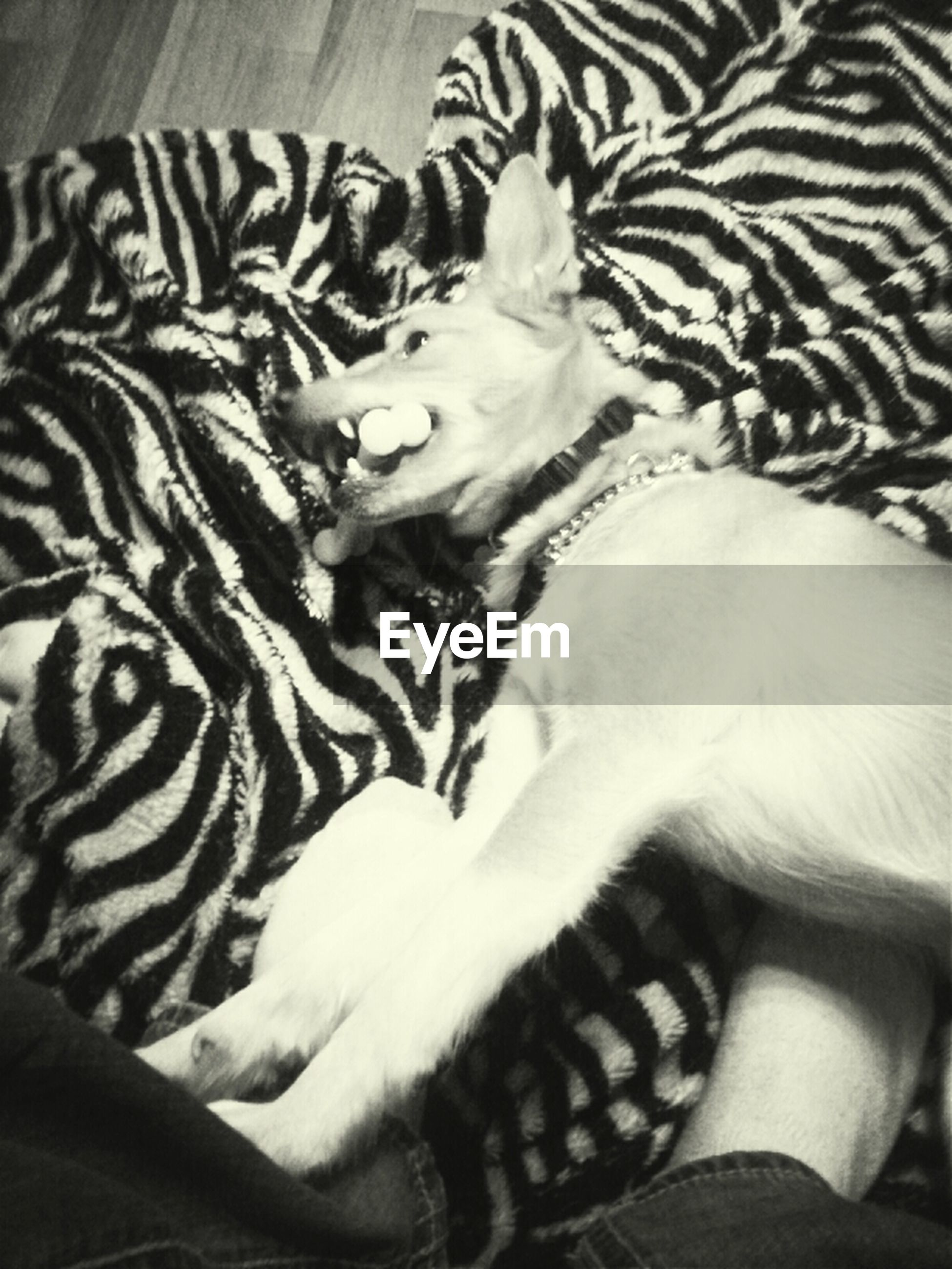 indoors, pets, animal themes, domestic animals, bed, one animal, relaxation, mammal, sleeping, resting, lying down, high angle view, blanket, home interior, dog, comfortable, sofa, domestic cat, close-up, sheet