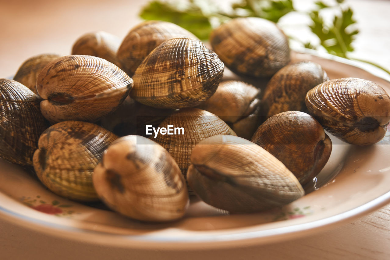 Plate with fresh clams to cooking