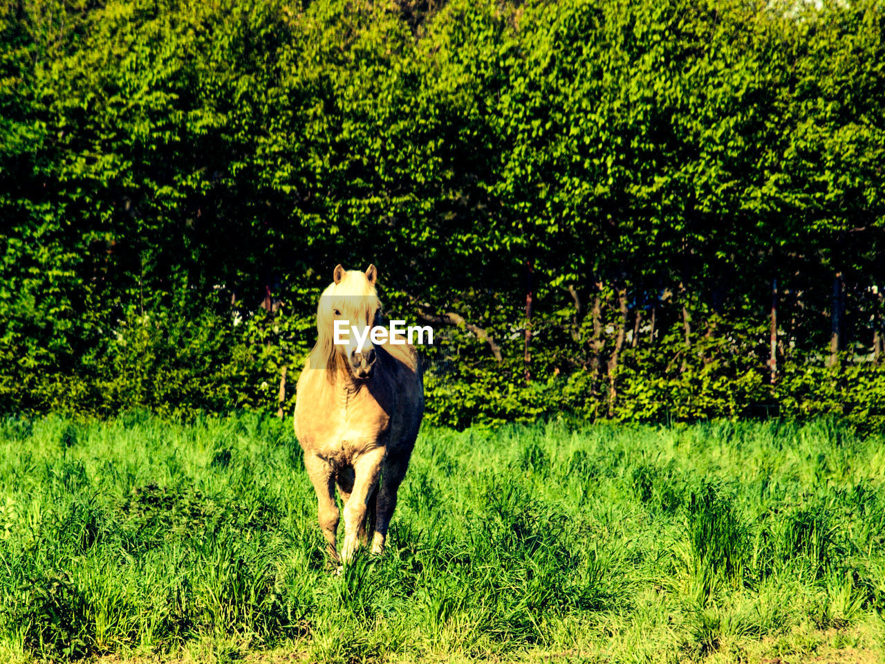 green color, mammal, animal themes, one animal, grass, dog, domestic animals, growth, plant, tree, field, nature, pets, no people, outdoors, day, full length