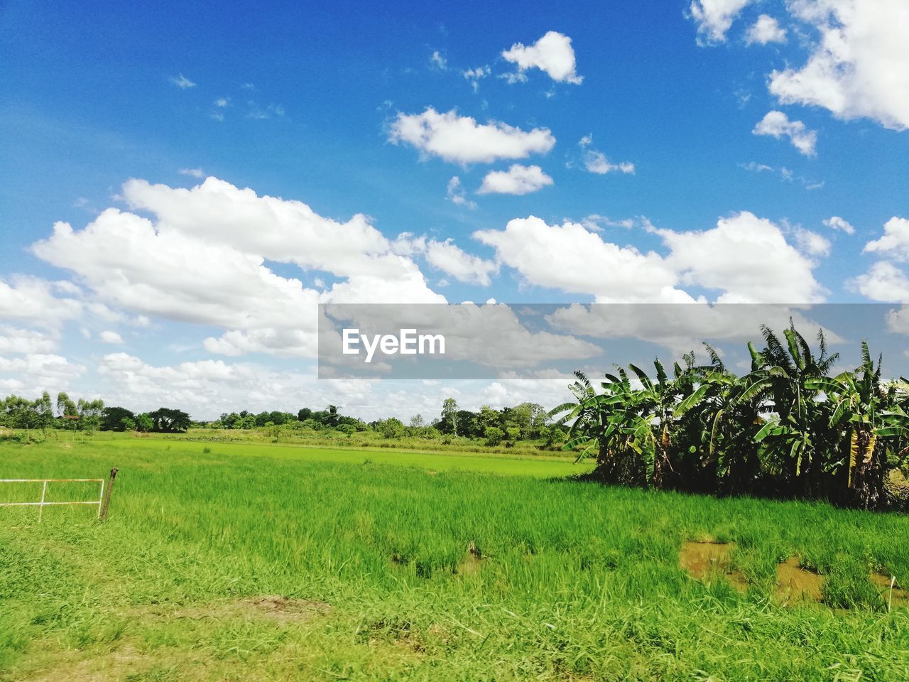 sky, plant, landscape, land, field, environment, cloud - sky, tranquility, tranquil scene, beauty in nature, scenics - nature, grass, green color, growth, agriculture, nature, tree, day, rural scene, no people, outdoors