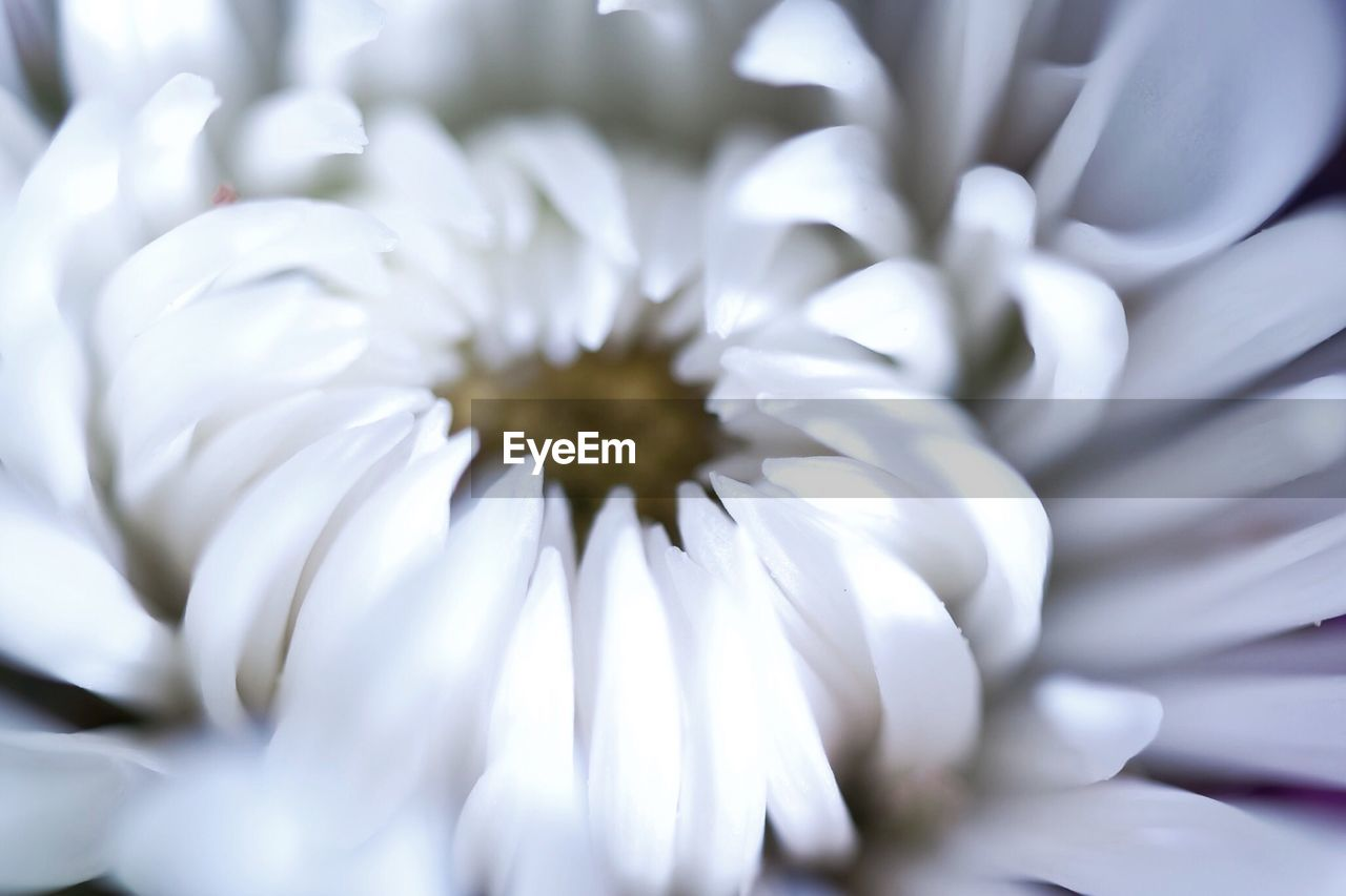 white color, flower, petal, selective focus, fragility, flower head, no people, nature, beauty in nature, freshness, close-up, day, growth, indoors