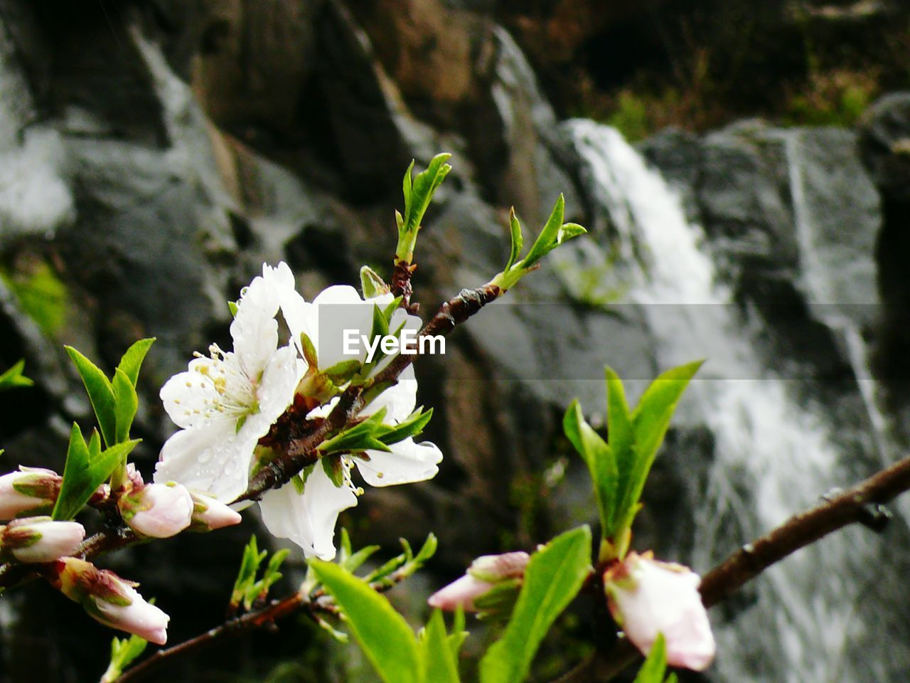 nature, beauty in nature, growth, outdoors, no people, freshness, day, flower, plant, fragility, close-up, water