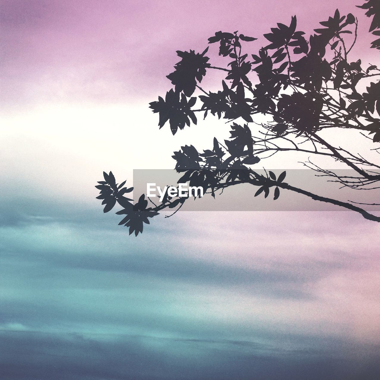 sky, plant, cloud - sky, nature, tree, beauty in nature, no people, silhouette, low angle view, tranquility, leaf, growth, plant part, branch, outdoors, day, scenics - nature, sunset, tranquil scene, dusk