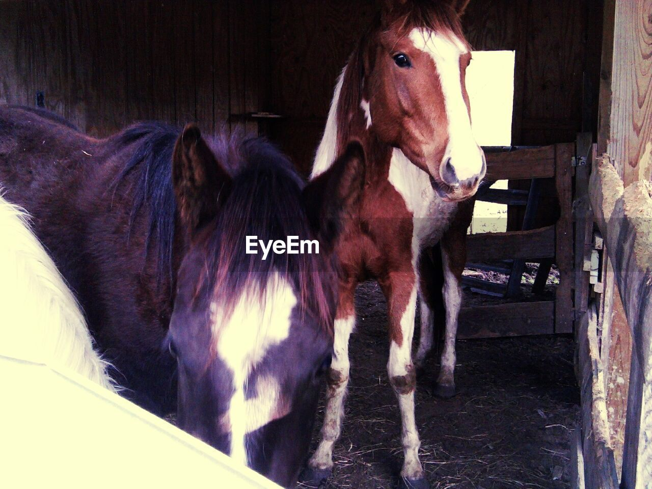 domestic animals, animal themes, mammal, horse, livestock, stable, no people, one animal, pets, day, indoors, nature, close-up