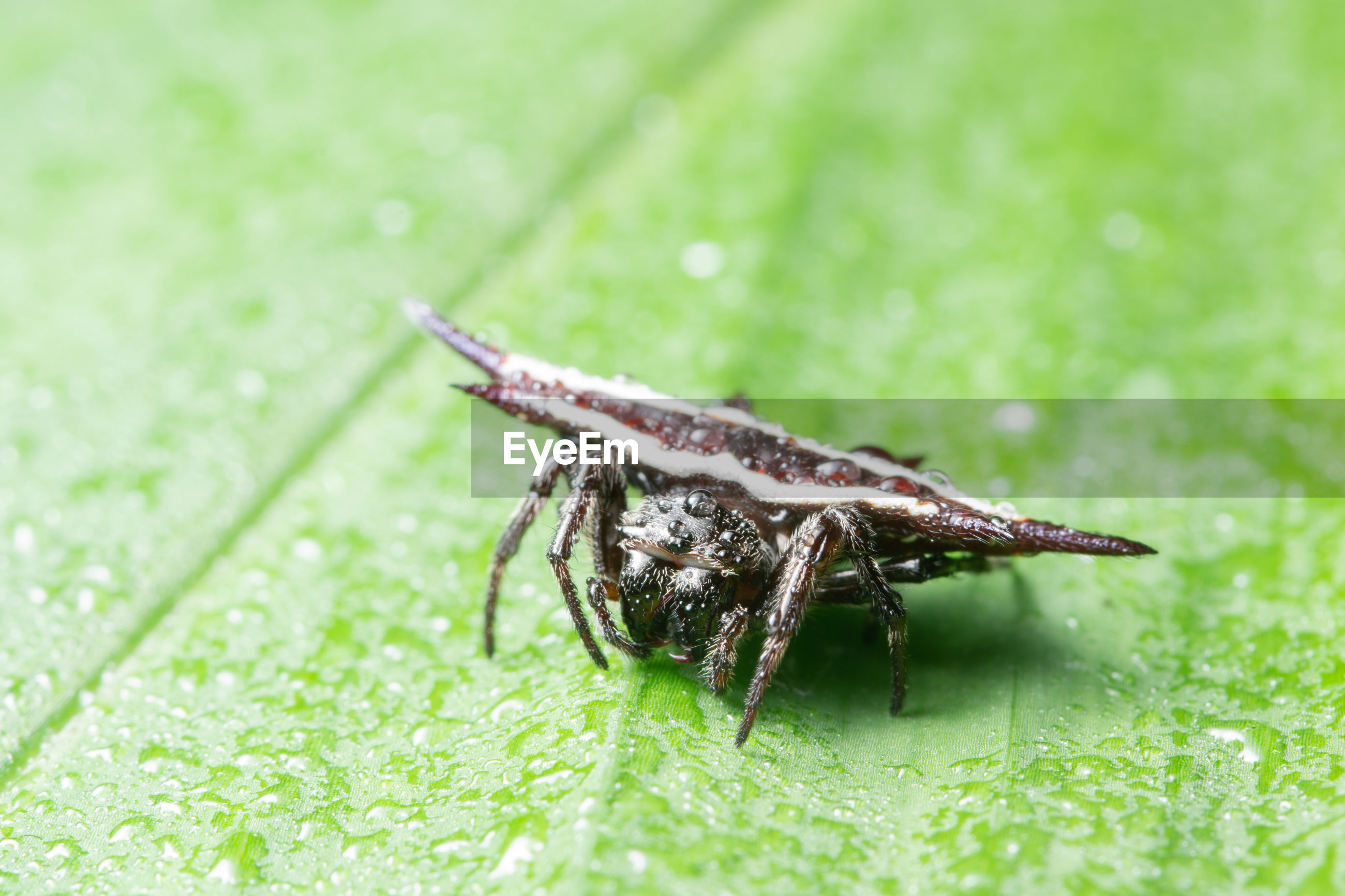 Close-up of spider on wet leaf