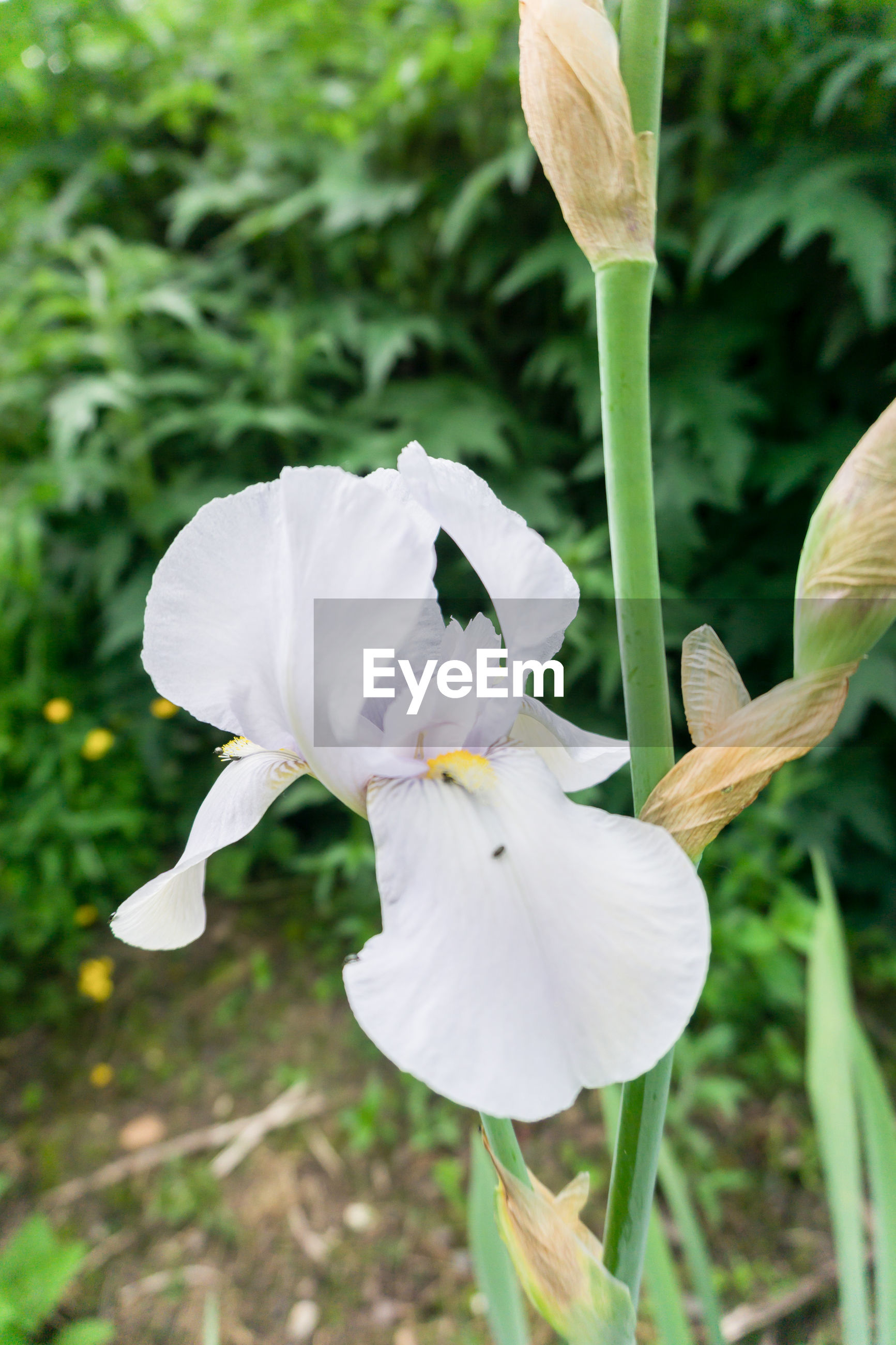 CLOSE-UP OF WHITE FLOWER AGAINST PLANTS