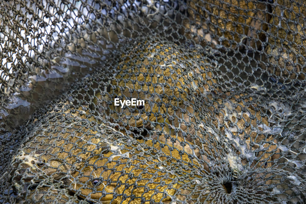 animal, animal themes, animal wildlife, no people, vertebrate, backgrounds, close-up, animals in captivity, animals in the wild, full frame, animal body part, one animal, pattern, mammal, day, cage, high angle view, fishing net, textured, animal scale