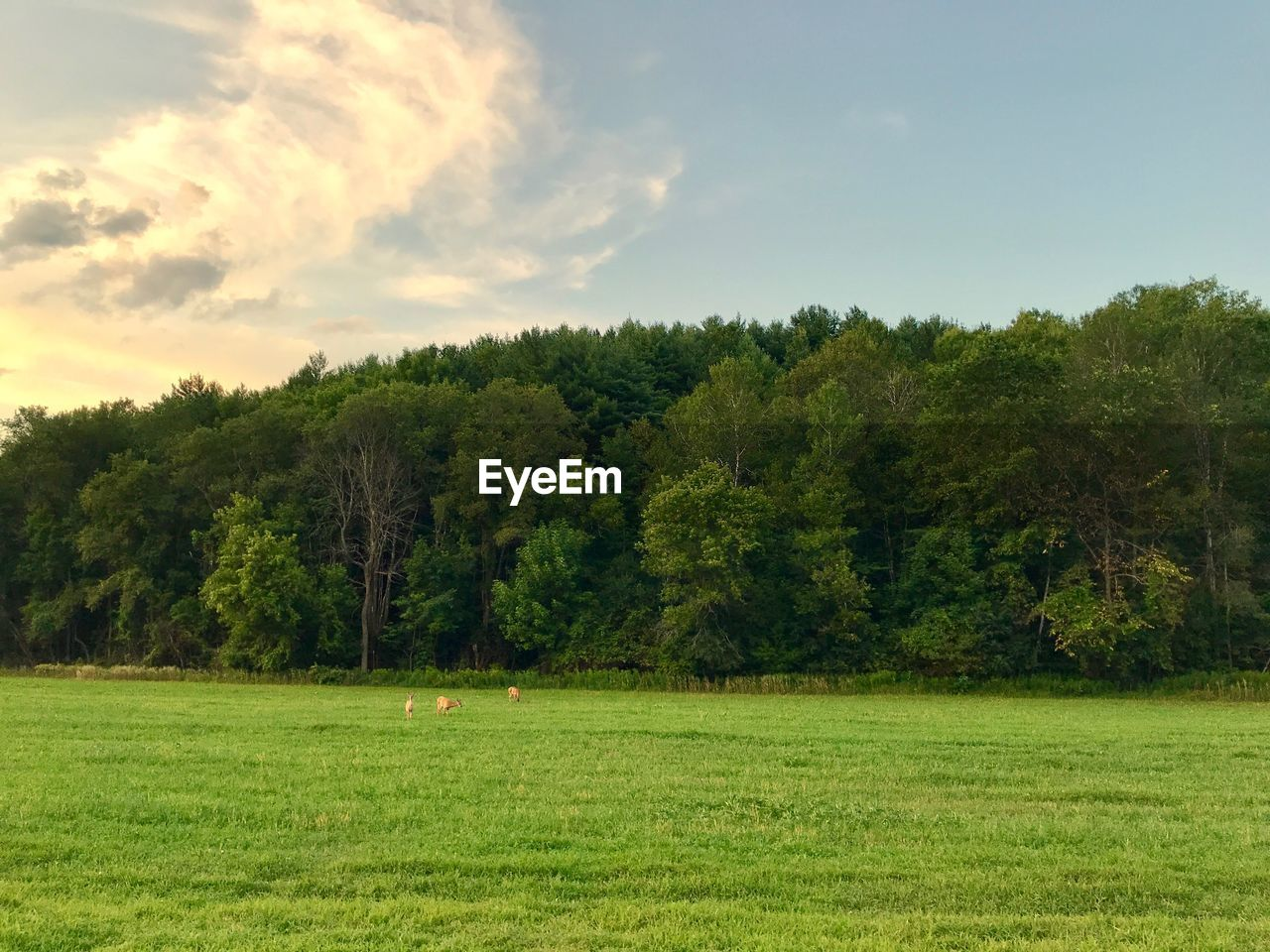 plant, tree, grass, green color, land, sky, beauty in nature, tranquil scene, environment, nature, landscape, tranquility, scenics - nature, growth, day, cloud - sky, field, no people, non-urban scene, outdoors