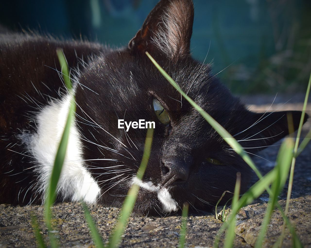 mammal, animal themes, cat, feline, one animal, animal, domestic cat, domestic animals, pets, domestic, vertebrate, no people, relaxation, close-up, nature, whisker, black color, animal body part, day, plant, animal head, animal eye