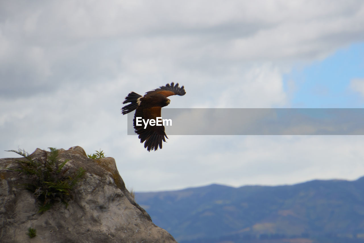 bird, animals in the wild, cloud - sky, animal themes, animal wildlife, sky, animal, vertebrate, spread wings, flying, one animal, mountain, nature, low angle view, day, beauty in nature, no people, bird of prey, mid-air, mountain range, outdoors, eagle