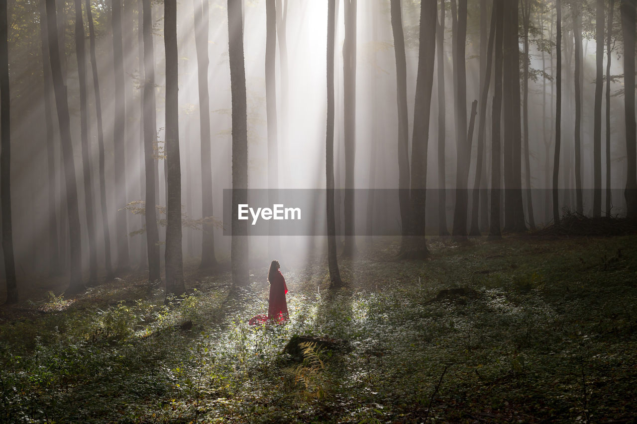 Woman With Red Blanket Standing By Tree Trunks In Forest