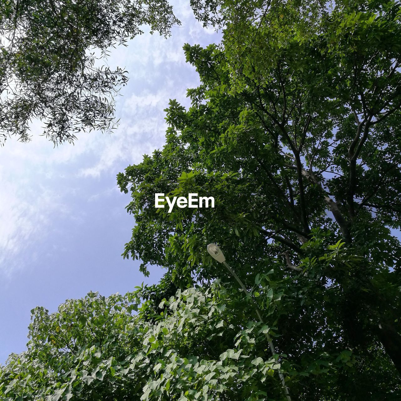 tree, low angle view, growth, nature, green color, green, sky, day, no people, beauty in nature, leaf, branch, outdoors
