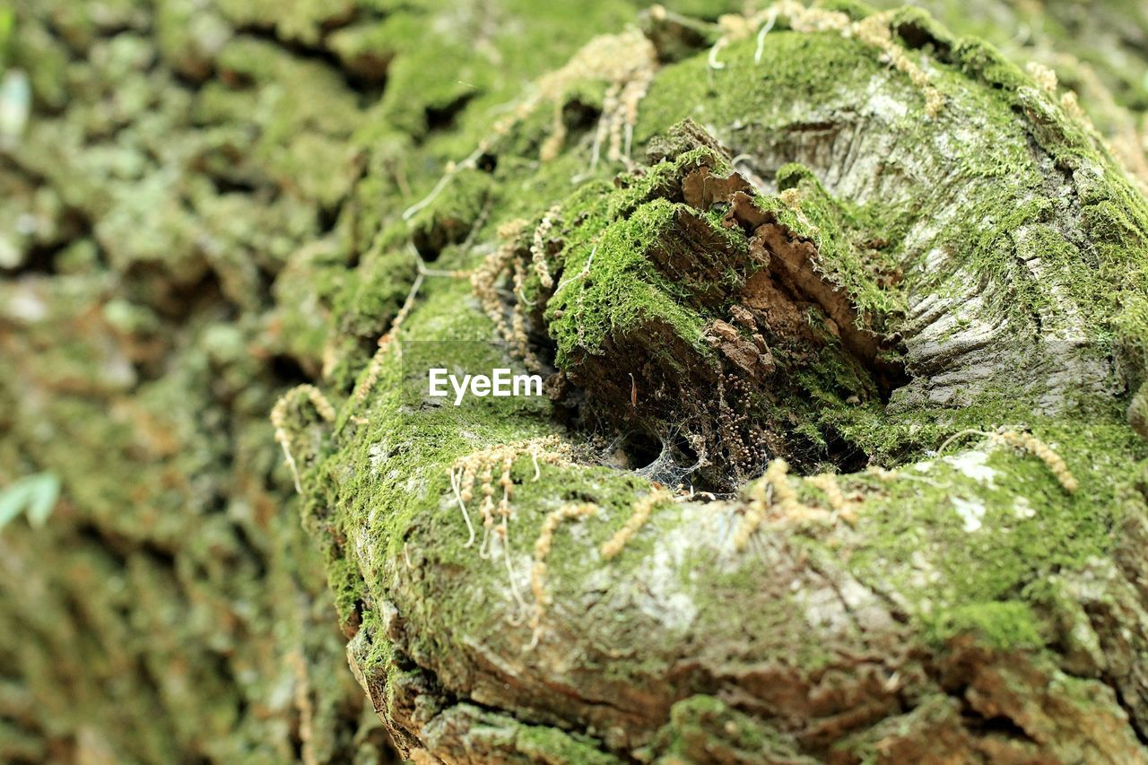 selective focus, plant, green color, close-up, moss, no people, growth, tree, day, textured, nature, rough, tree trunk, full frame, trunk, outdoors, focus on foreground, bark, pattern, backgrounds, lichen
