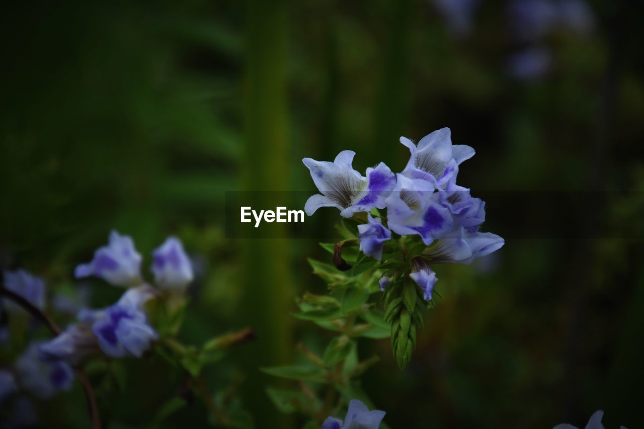 flowering plant, flower, vulnerability, fragility, beauty in nature, plant, petal, purple, freshness, growth, focus on foreground, inflorescence, flower head, close-up, nature, no people, outdoors, day, blue, blossom, pollen