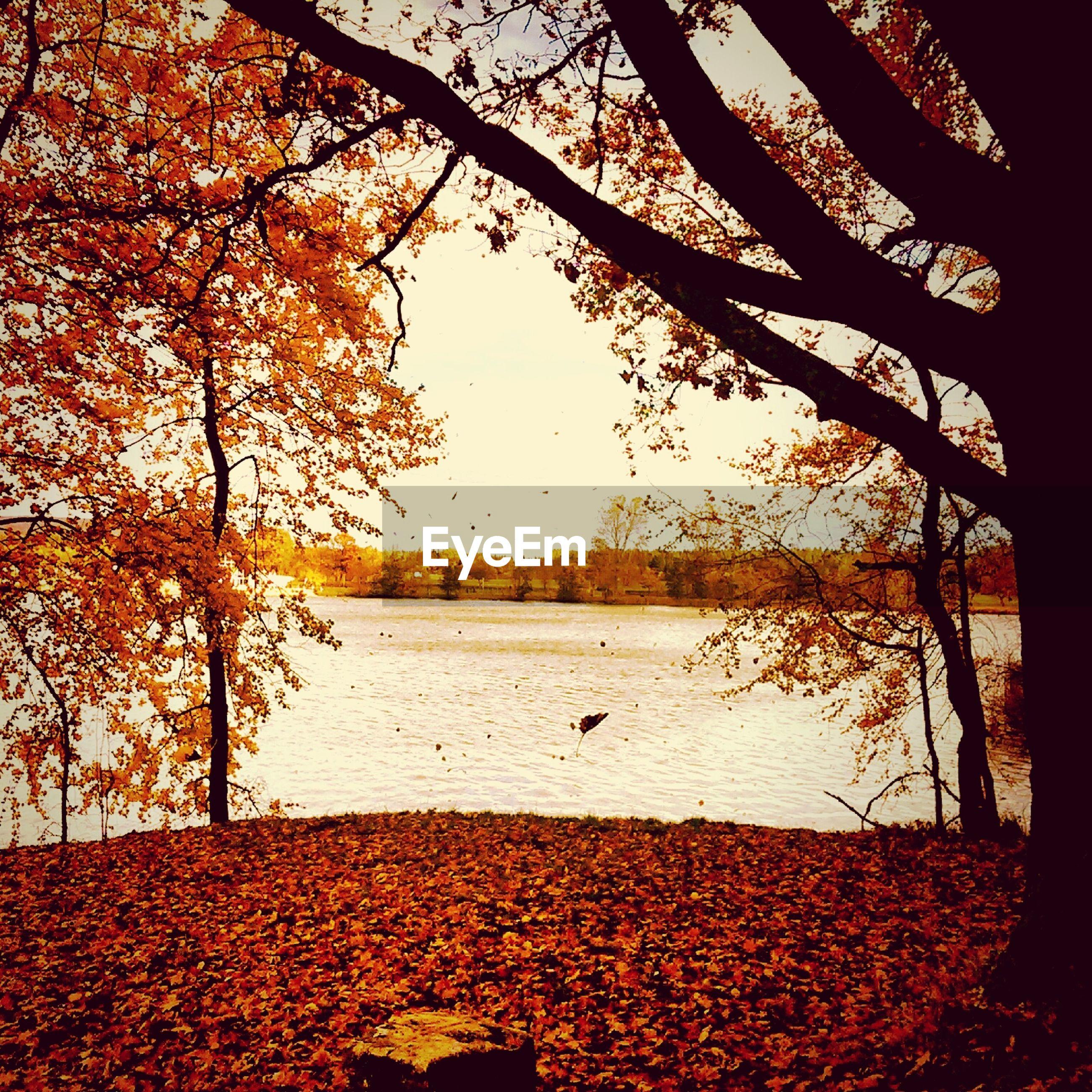 Pond in park in autumn