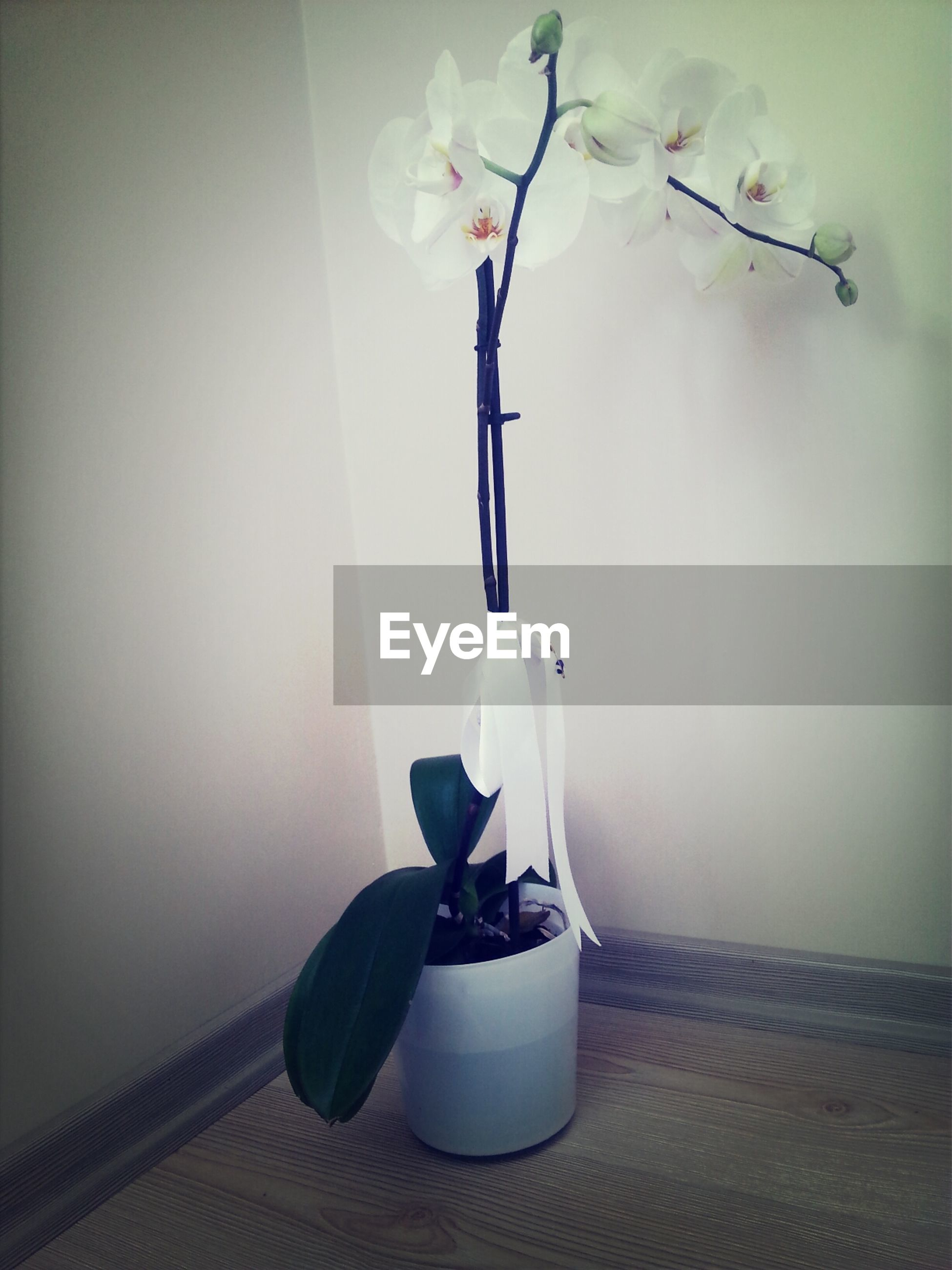 indoors, vase, table, home interior, still life, wall - building feature, flower, glass - material, wall, decoration, hanging, potted plant, transparent, domestic room, bottle, no people, lighting equipment, window sill, copy space, window