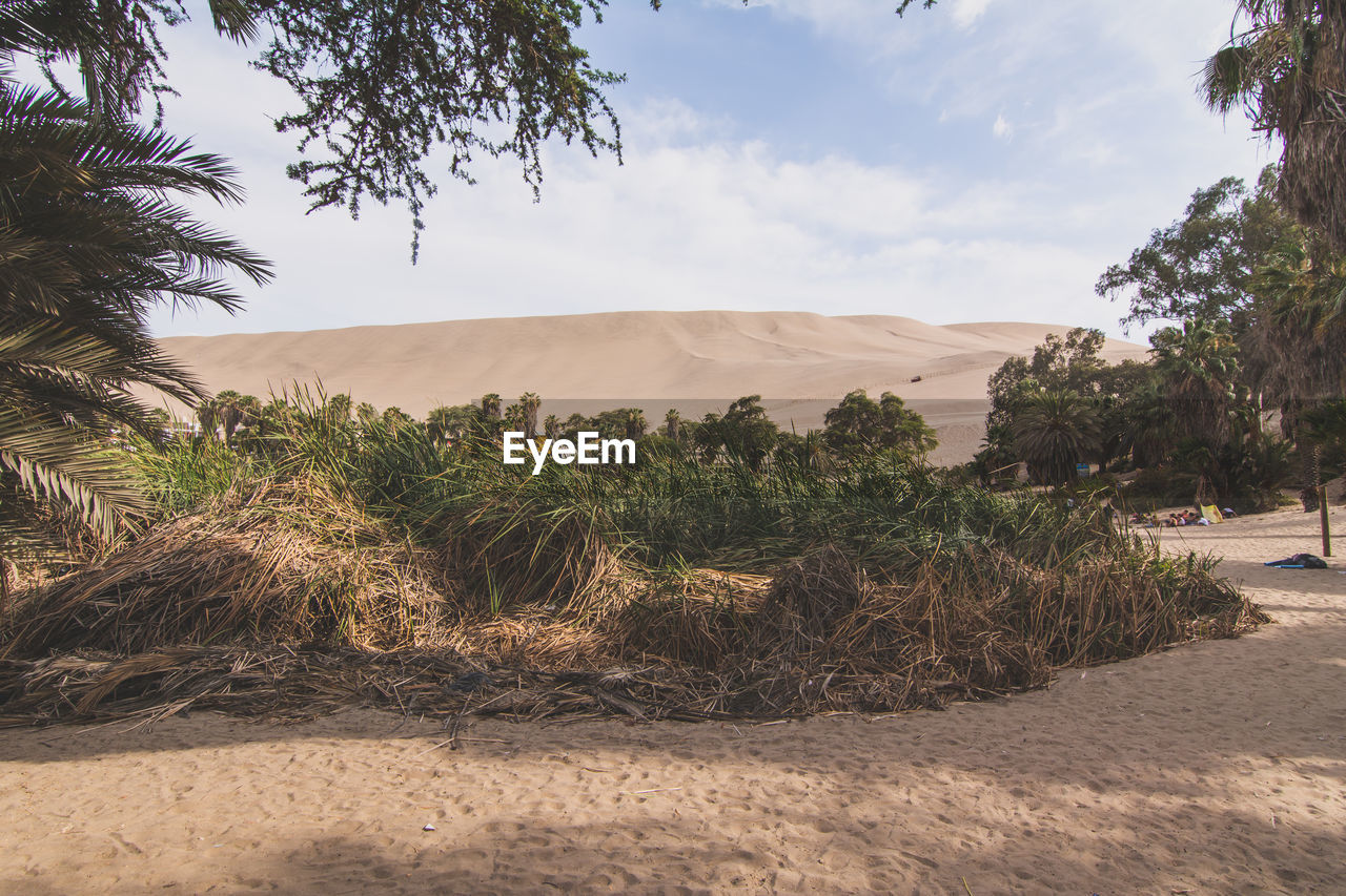 Dry Grass And Plants On Sand Dunes