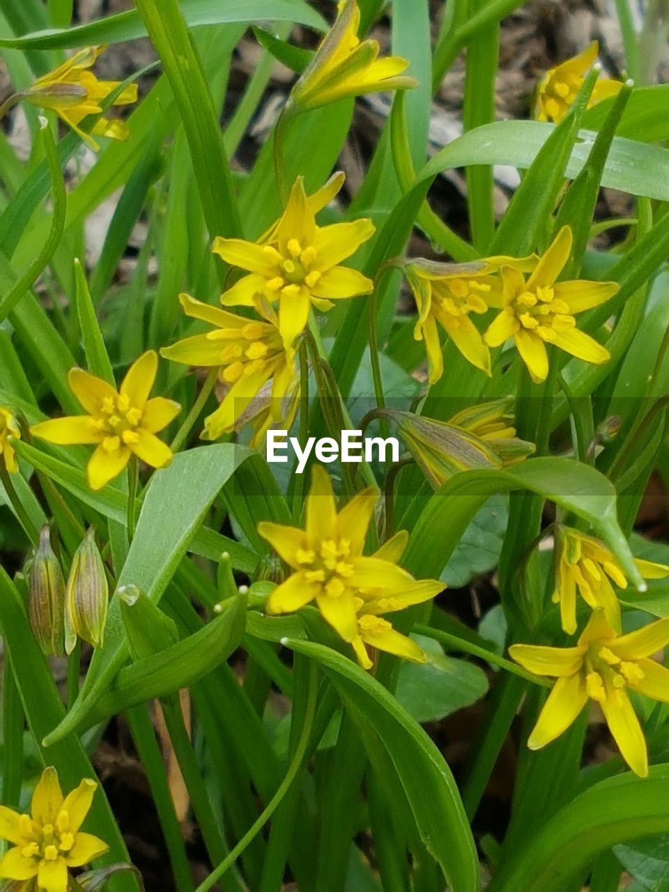 plant, flowering plant, flower, growth, yellow, beauty in nature, freshness, fragility, vulnerability, close-up, petal, green color, inflorescence, nature, flower head, day, plant part, no people, leaf, botany