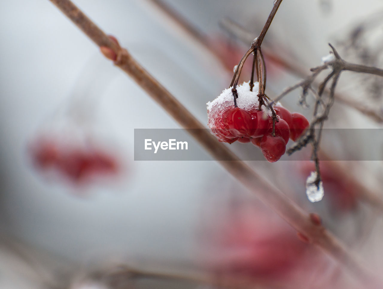CLOSE-UP OF FROZEN PLANT ON SNOW