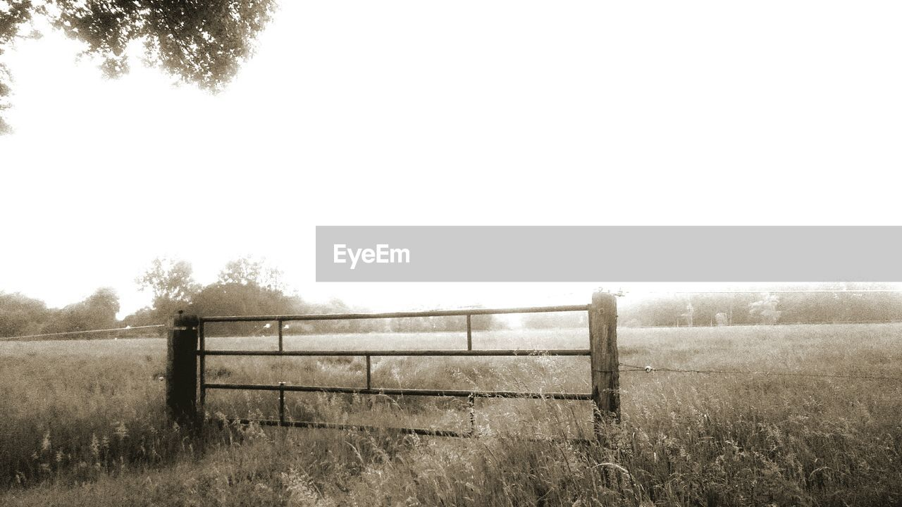 field, grass, rural scene, tranquil scene, landscape, nature, scenics, non-urban scene, no people, copy space, tree, agriculture, tranquility, beauty in nature, day, clear sky, outdoors, paddock, growth, wooden post, sky, animal themes