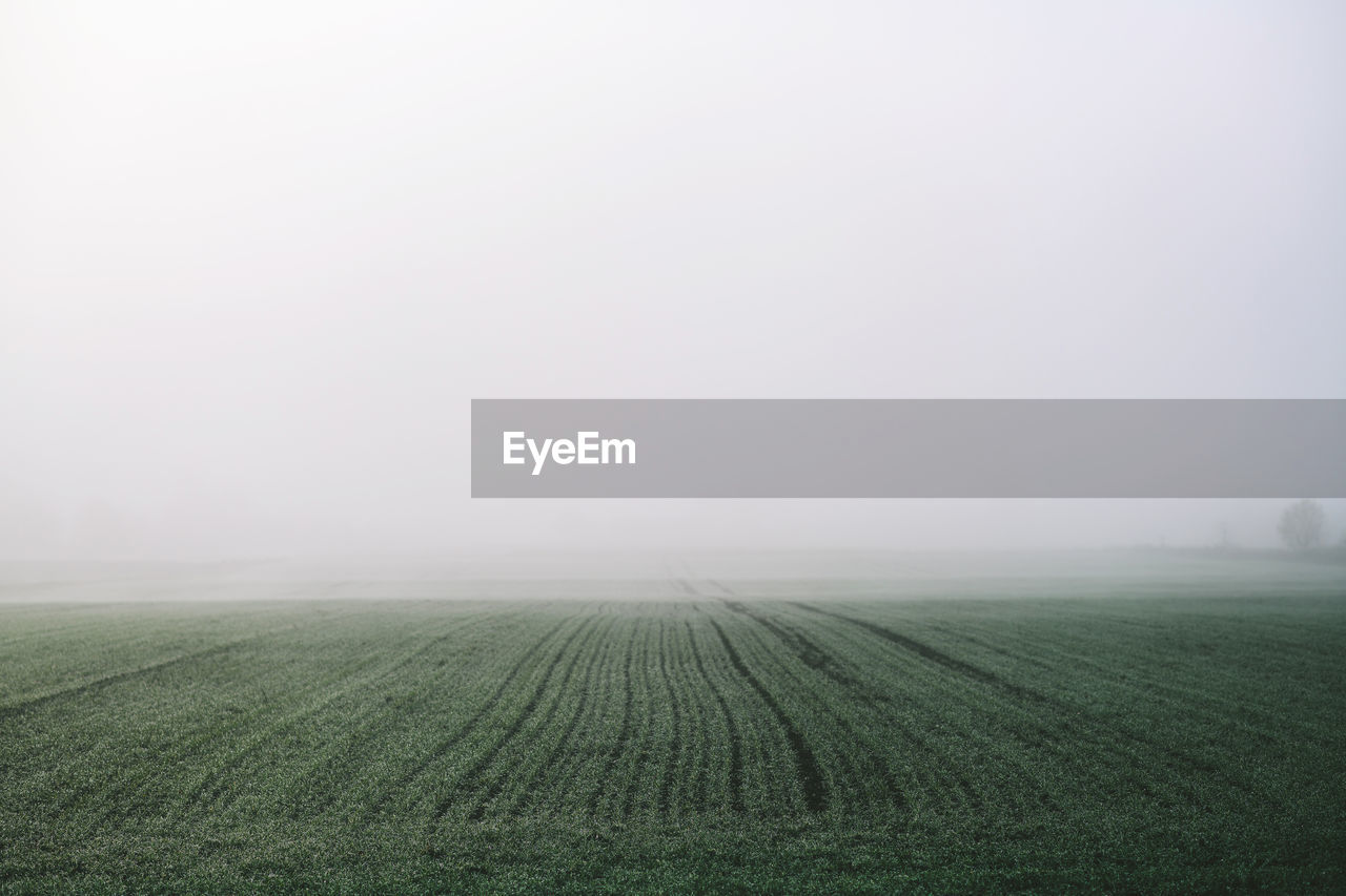 field, landscape, agriculture, environment, land, fog, farm, rural scene, tranquility, copy space, scenics - nature, tranquil scene, sky, beauty in nature, plant, nature, day, growth, crop, no people, outdoors, plantation