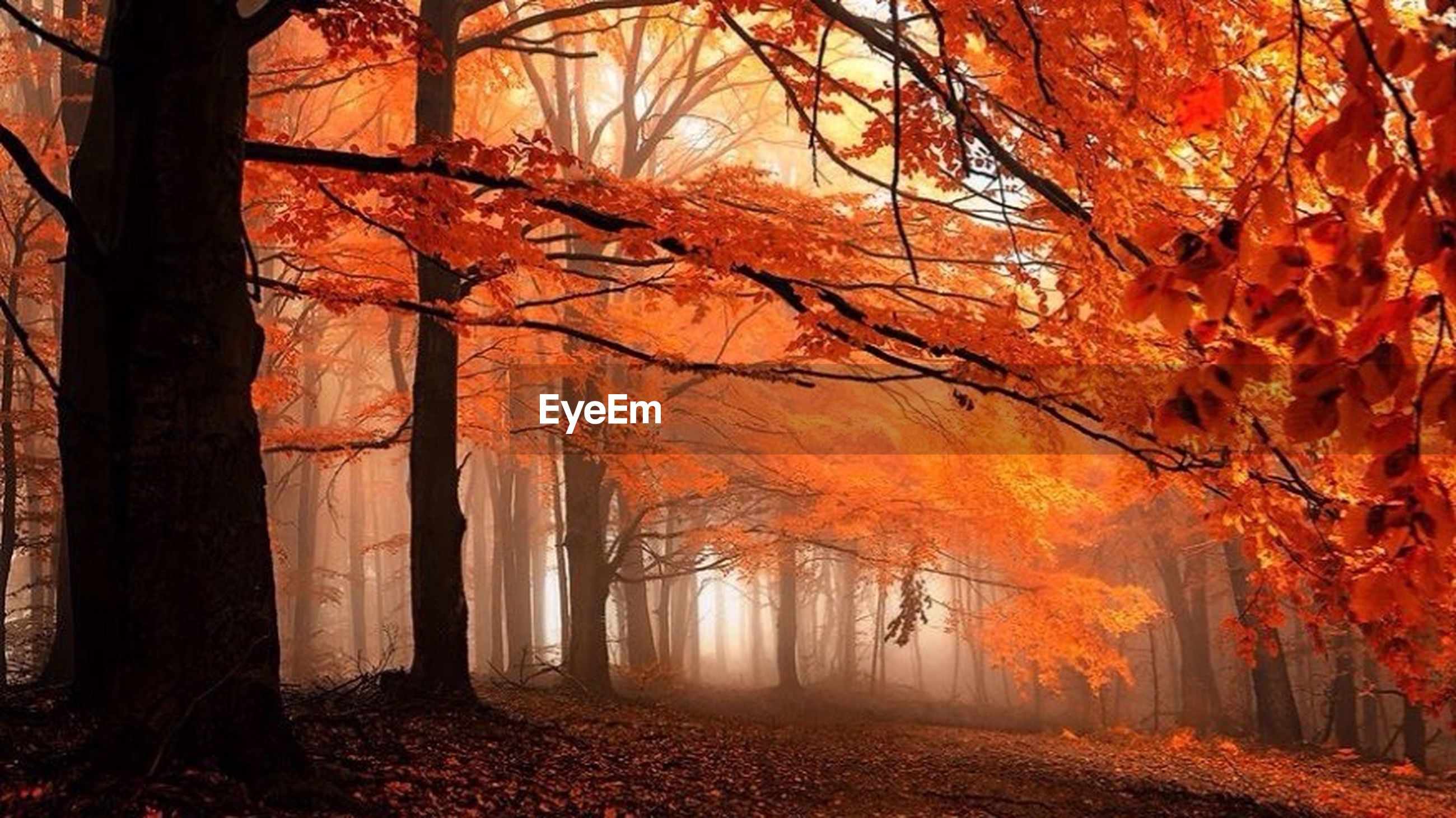 autumn, tree, change, season, orange color, branch, tranquility, nature, tree trunk, beauty in nature, leaf, growth, bare tree, tranquil scene, scenics, outdoors, no people, fall, fallen, day