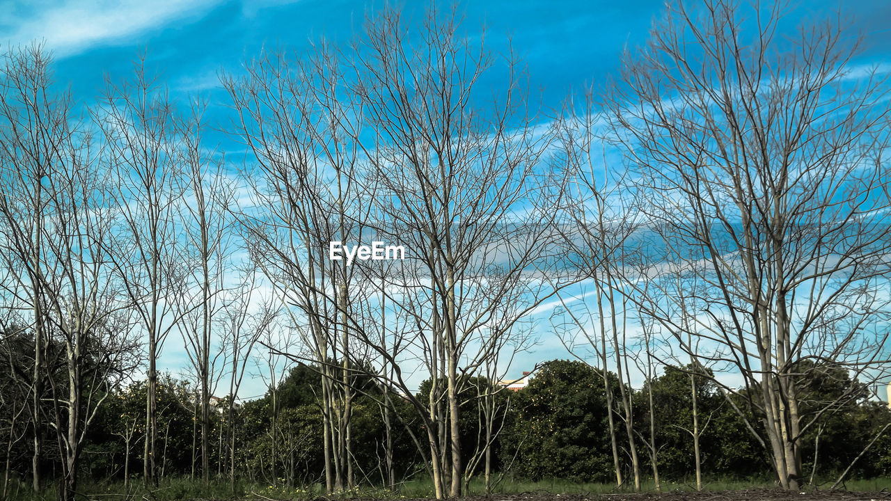 bare tree, tree, day, forest, nature, outdoors, sky, no people, tranquility, scenics, landscape, blue, beauty in nature, grass