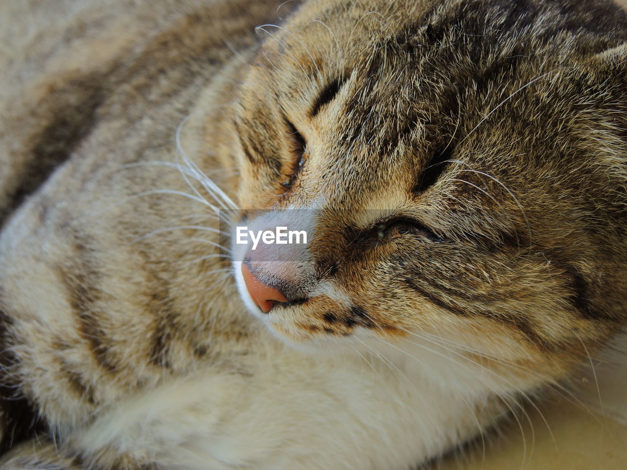 feline, cat, mammal, animal themes, animal, domestic cat, one animal, pets, domestic, domestic animals, eyes closed, close-up, vertebrate, whisker, relaxation, sleeping, no people, animal body part, indoors, resting, animal head, snout, tabby