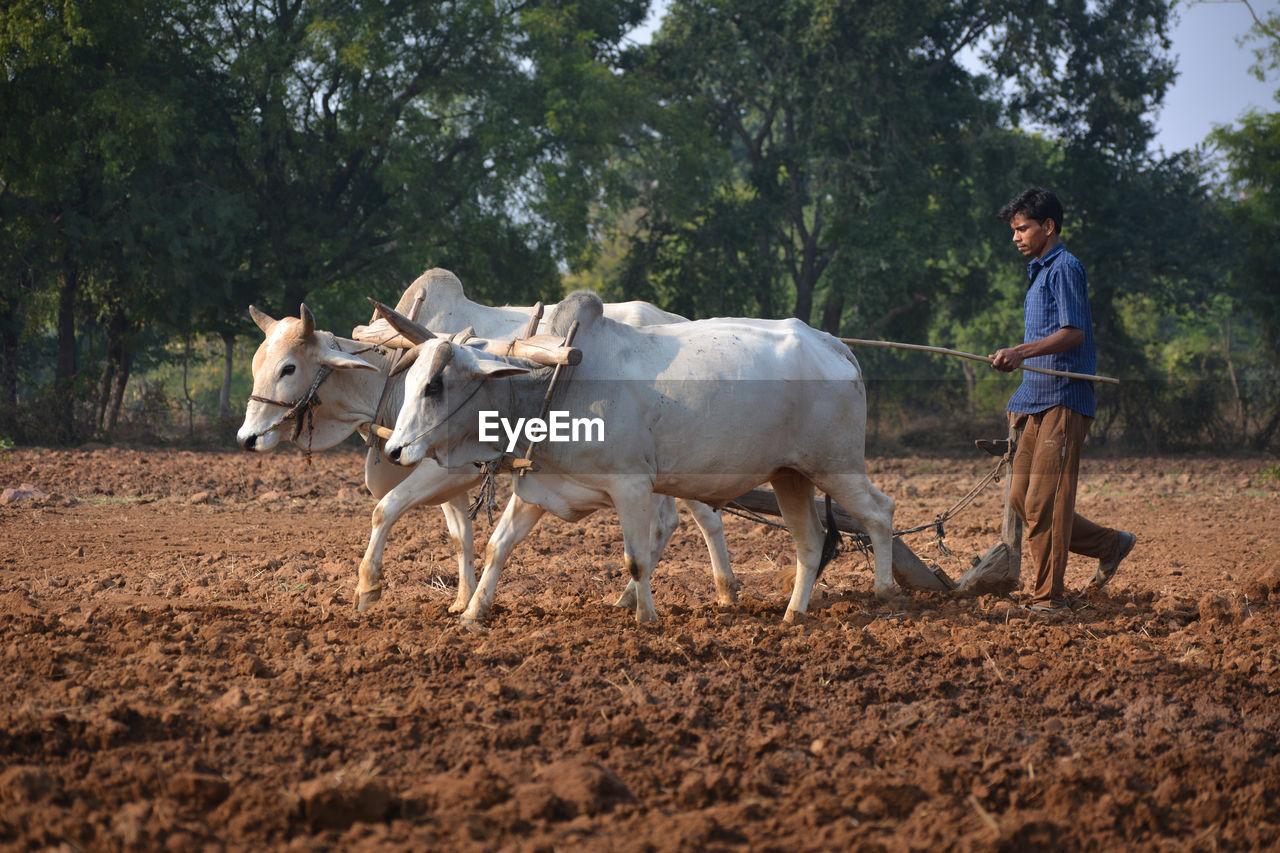 HORSES STANDING ON FARM
