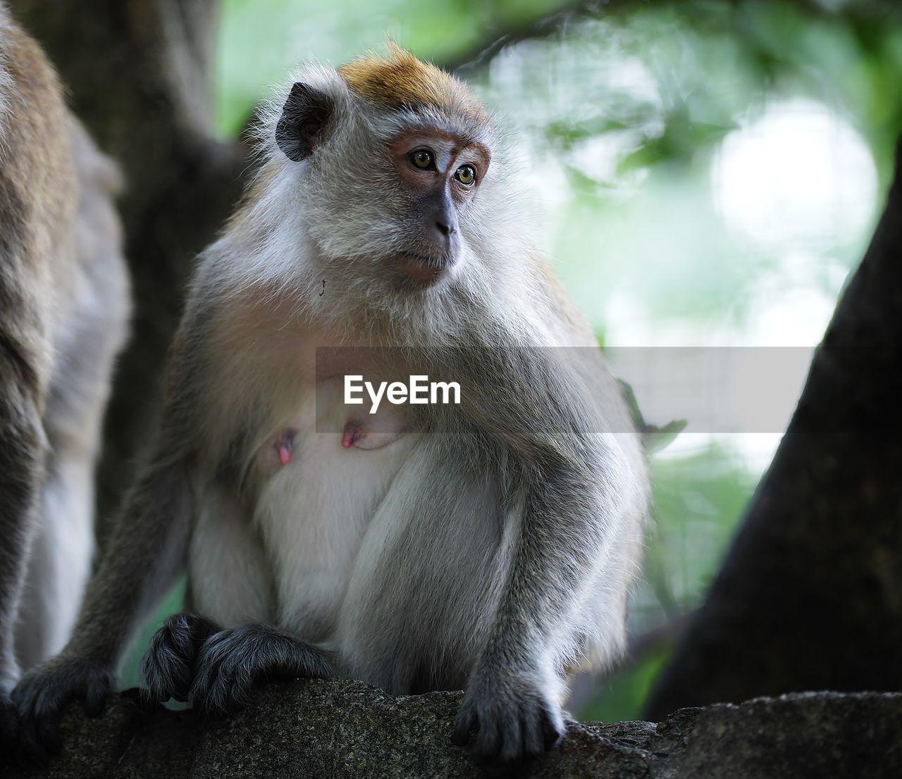 Monkey Sitting By Tree