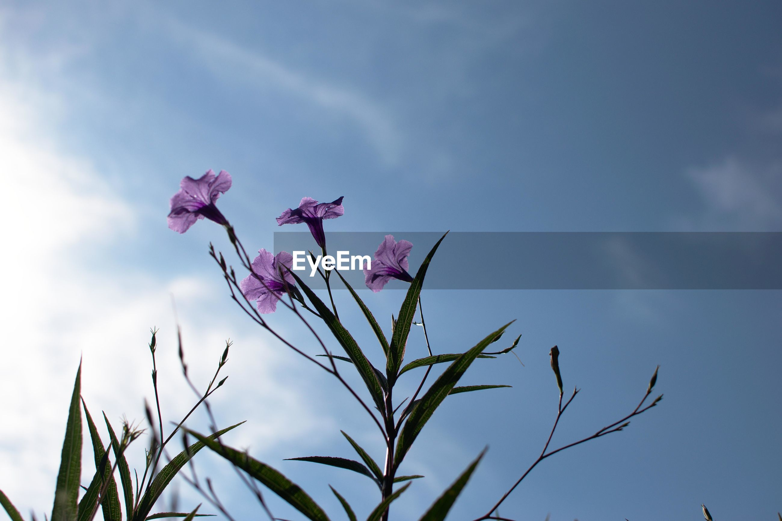Low angle view of purple flowers blooming against sky