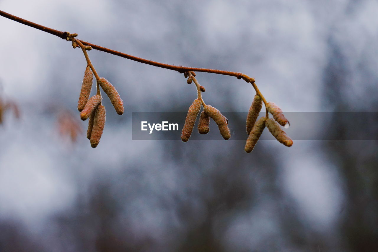 Close-up of branch against sky