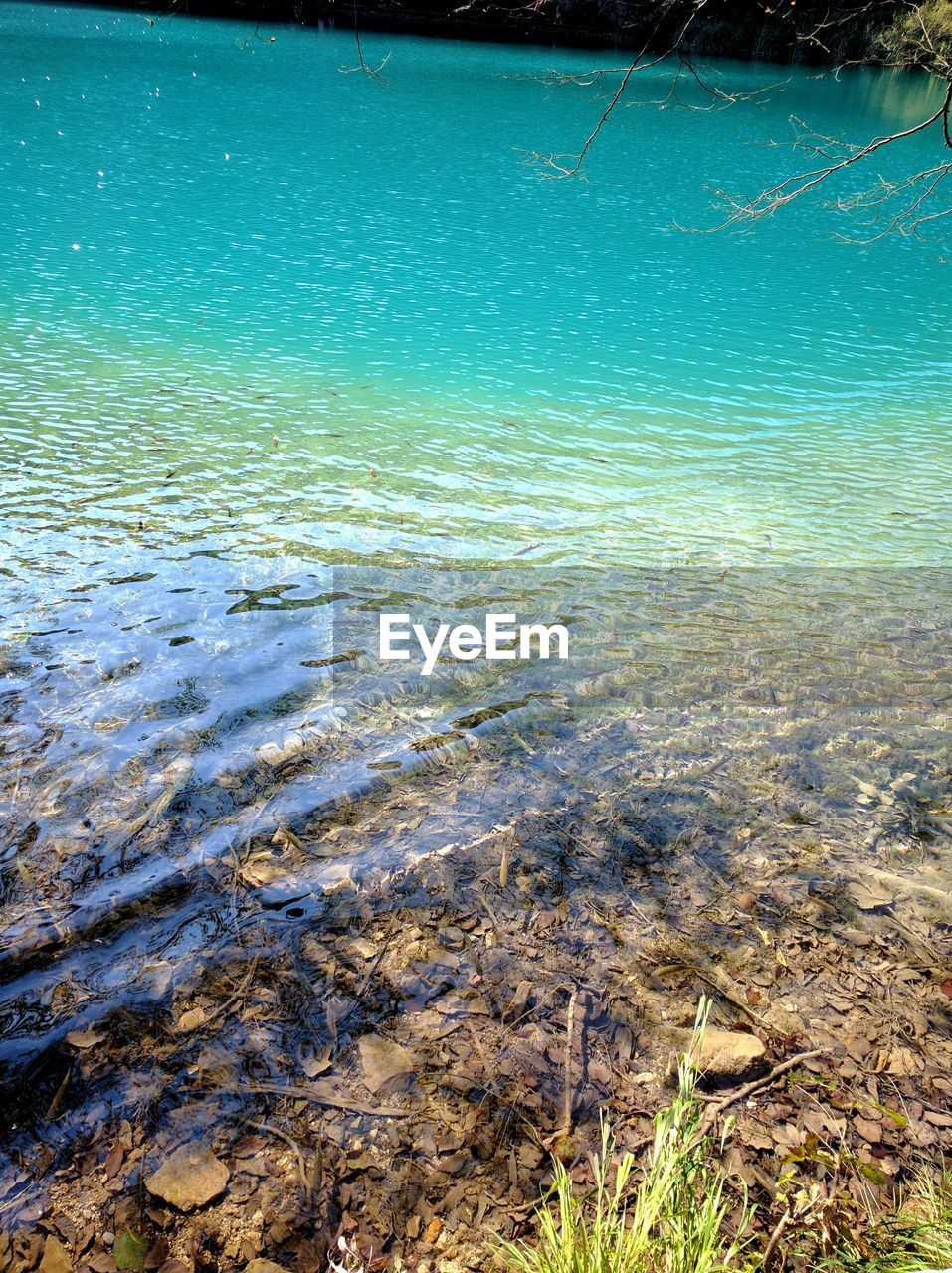 water, nature, rippled, no people, beauty in nature, tranquility, outdoors, sea, day, underwater, shallow, scenics, sea life, undersea
