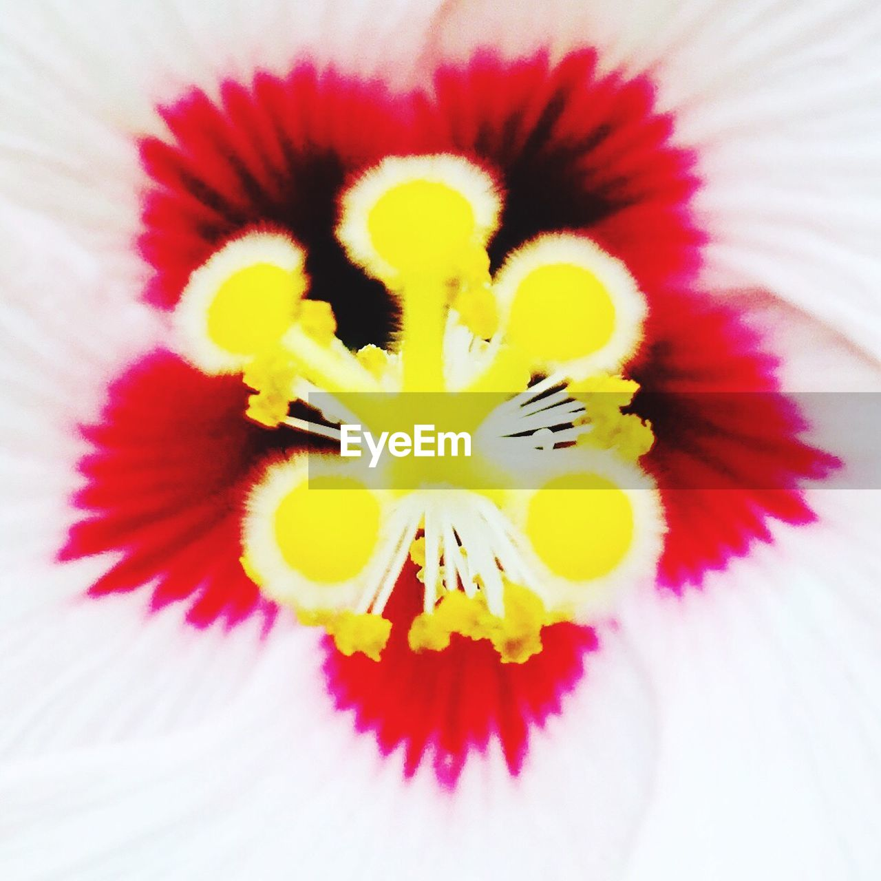 flower, petal, flower head, yellow, close-up, fragility, no people, freshness, indoors, day, beauty in nature, nature