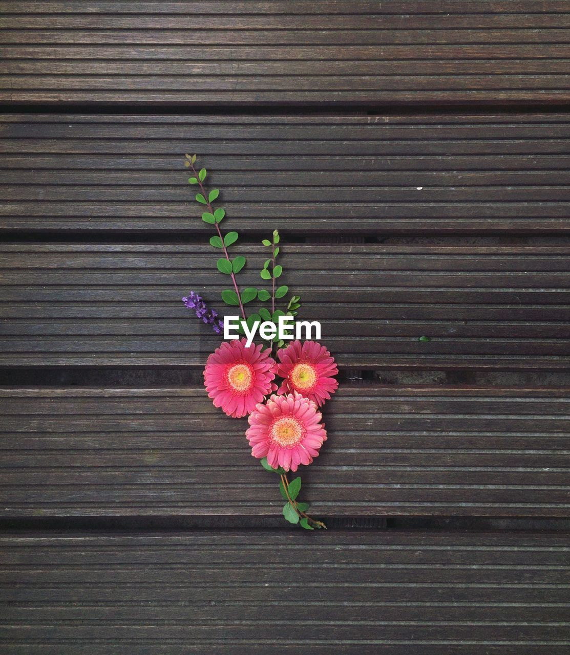 CLOSE-UP OF PINK FLOWERS ON WOOD