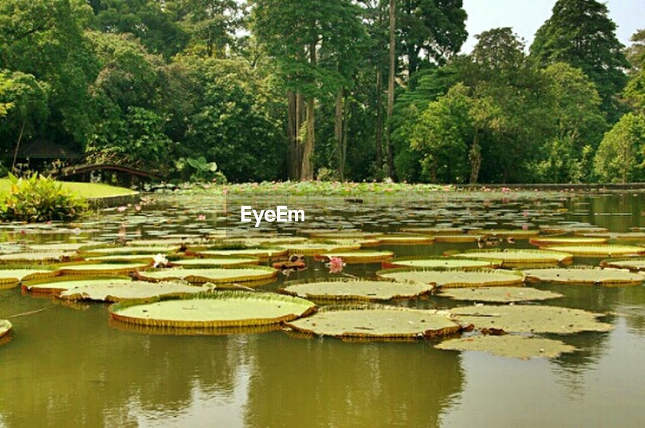 tree, water, outdoors, reflection, day, lake, nature, no people, floating on water, tranquility, growth, water lily, one animal, scenics, travel destinations, animals in the wild, animal themes, beauty in nature, grass, lily pad, bird