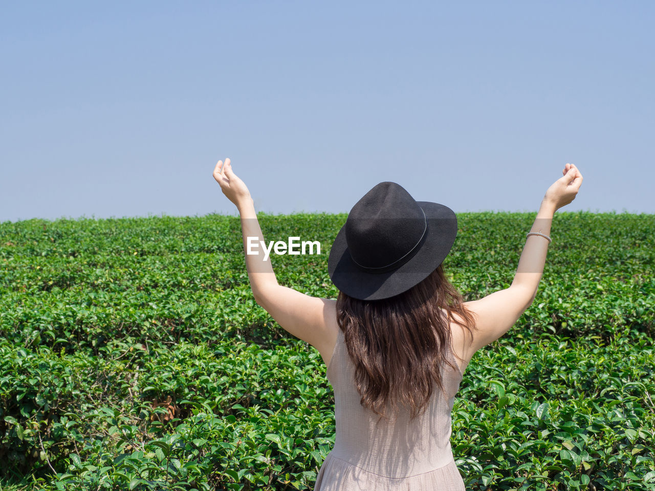 Rear view of woman wearing hat standing amidst plants against clear sky