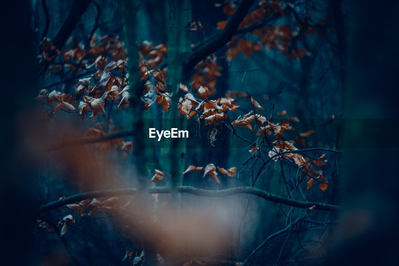 plant, tree, selective focus, nature, leaf, plant part, no people, day, beauty in nature, land, growth, forest, branch, autumn, outdoors, tranquility, close-up, change, focus on foreground, vulnerability, leaves