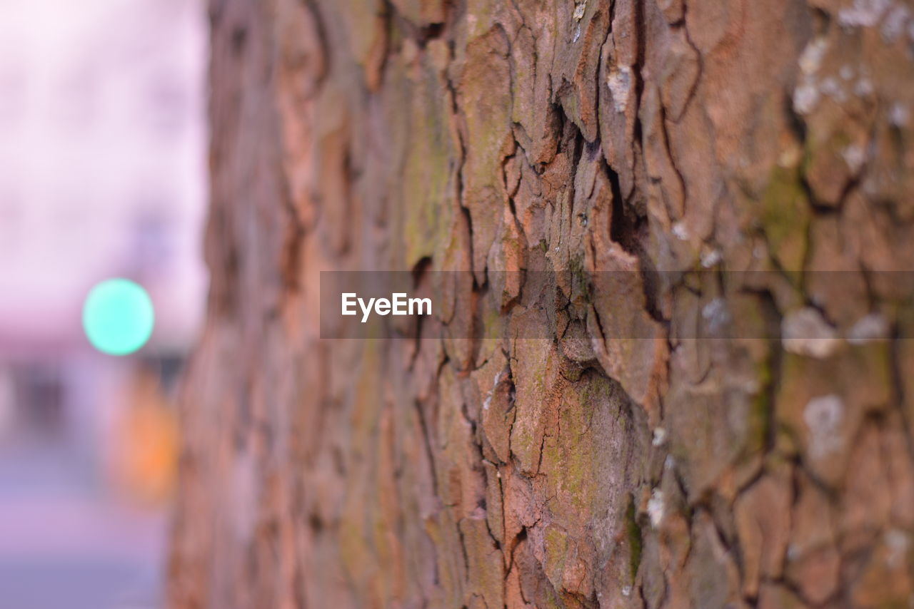 textured, tree trunk, close-up, rough, no people, focus on foreground, day, outdoors, tree, nature