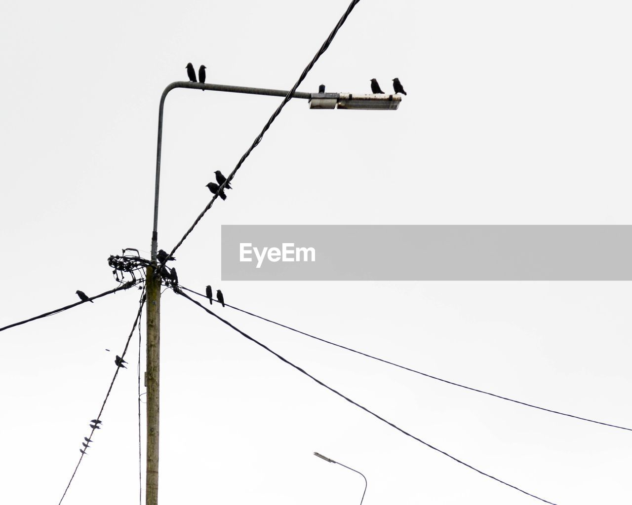 Low angle view of birds perching on street light against clear sky
