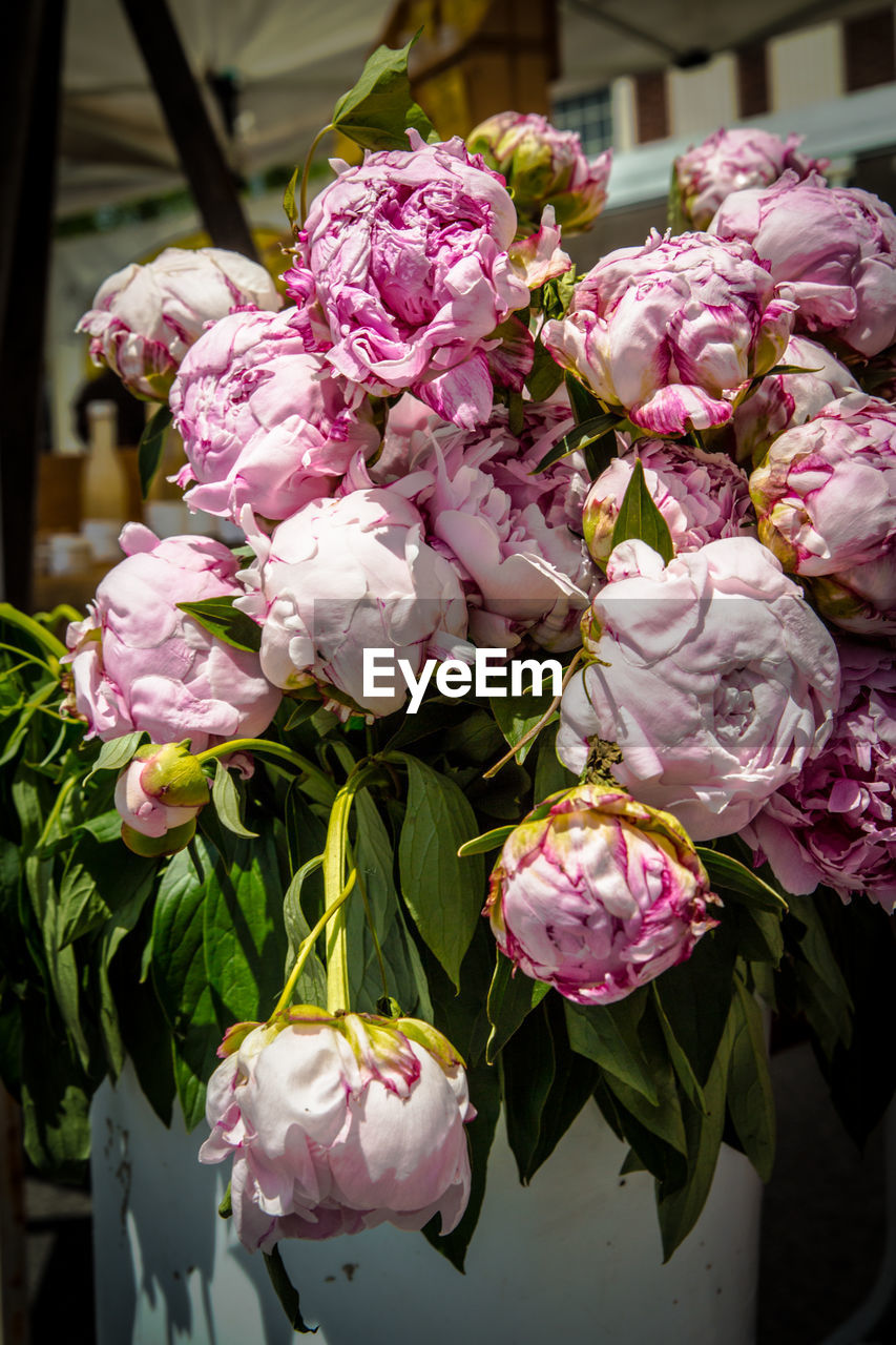 flowering plant, flower, plant, freshness, beauty in nature, vulnerability, fragility, petal, close-up, growth, pink color, nature, flower head, day, inflorescence, no people, focus on foreground, outdoors, botany, white color, bunch of flowers, flower arrangement, softness, purple, bouquet, lilac